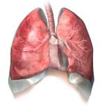 Το Αναπνευστικό Σύστημα