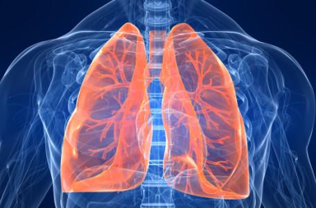 Πνεύμονας